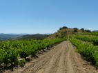 A 'road' in Priorat!