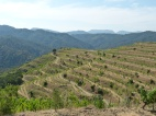 The steep, terraced vineyards of Clos Mogador