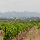 Recaredo vineyards with Montsant in background